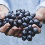 Tamjanika – Ponos vinogradarstva u Srbiji