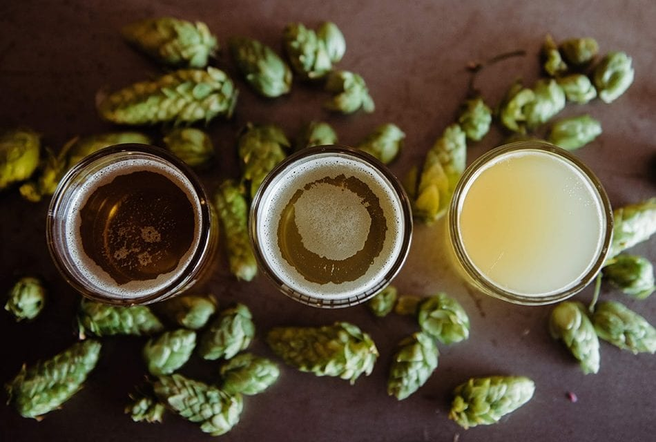 Hmelj – sve o hmelju za pivare početnike