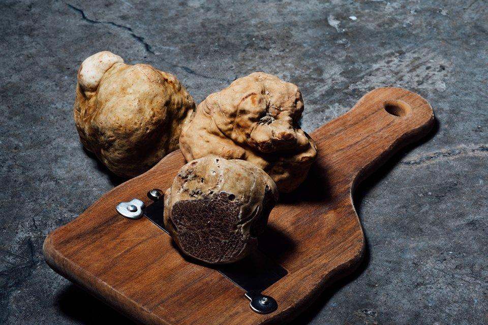 Tartufi – sve o tartufima u Srbiji