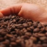Autofagija i kafa