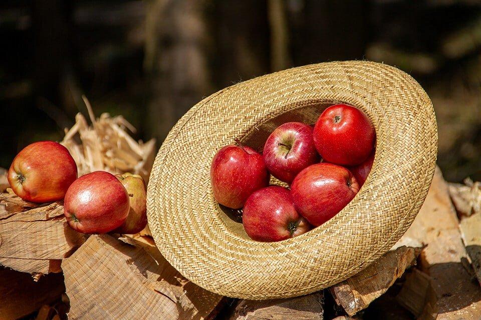 Od kojih sorti jabuka se pravi jabukovaca