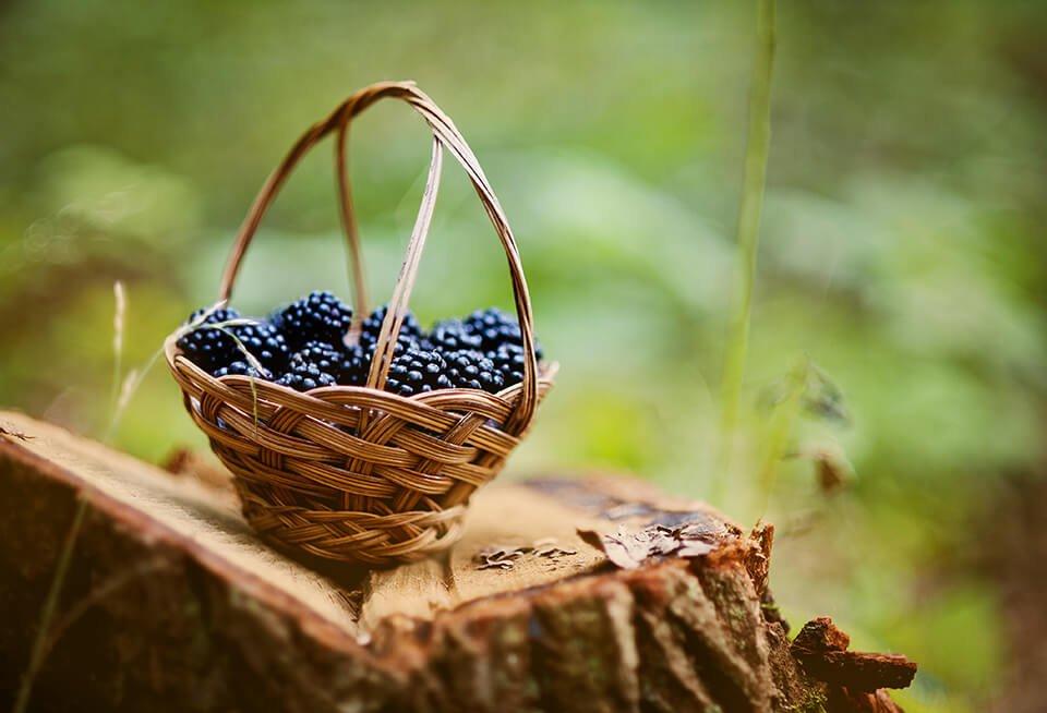 03 Lekovito voce bogato vitaminima i mineralima