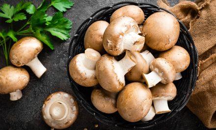 Jestive gljive u Srbiji